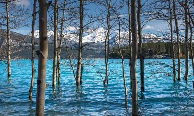 2021.04.15 - 亚伯拉罕湖中的树,加拿大艾伯塔