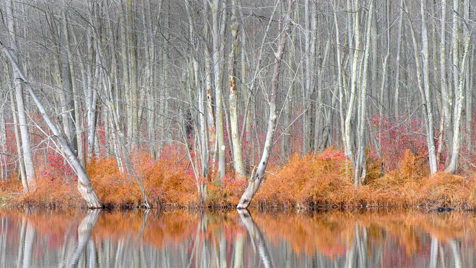 Bare trees and autumn ferns in Beaver Lake Nature Center, New York (© Chris Murray/Alamy)