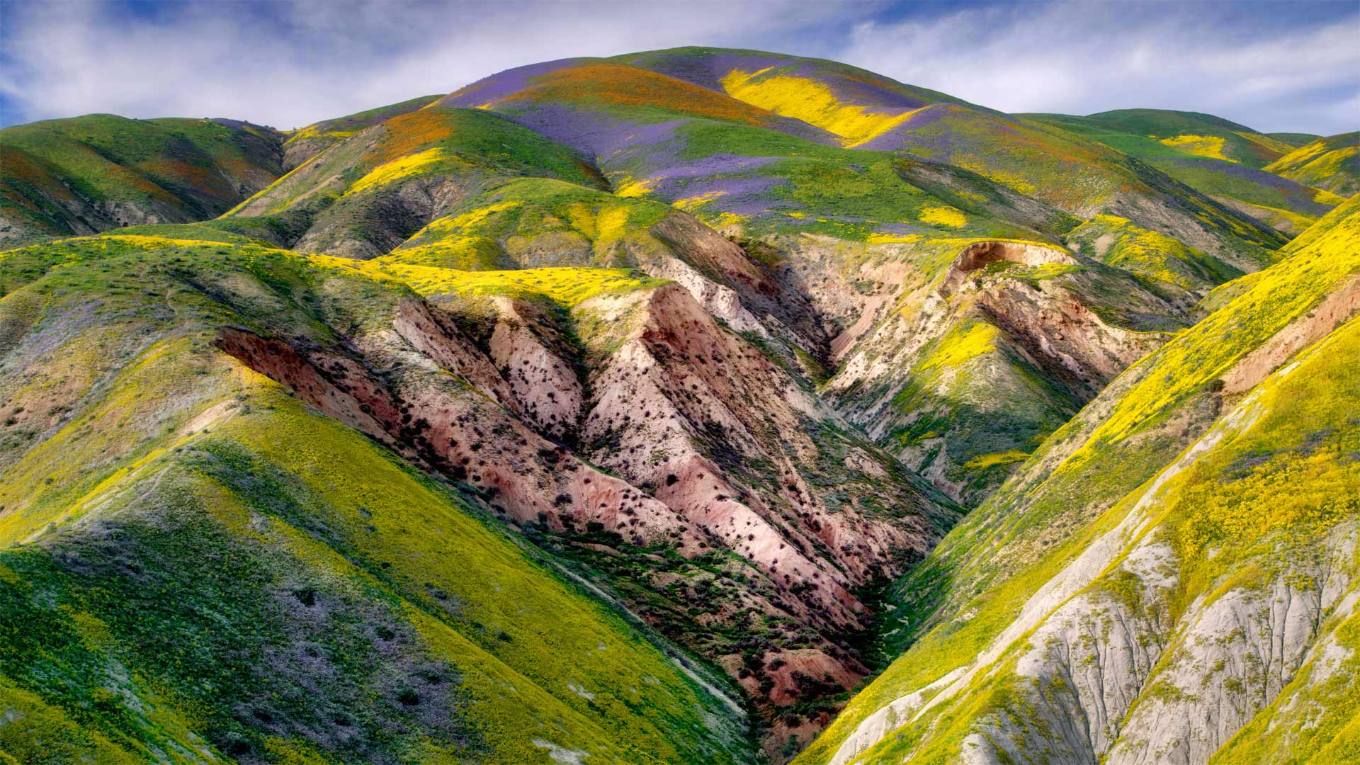 卡里佐平原国家纪念区的野花,加利福尼亚 (© Dennis Frates/Alamy)