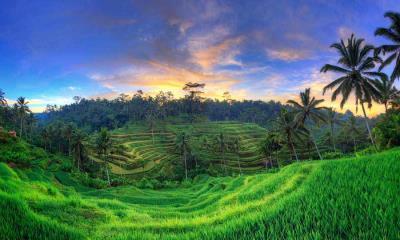 2021.04.20 - 乌布德格拉朗梯田,印度尼西亚巴厘岛