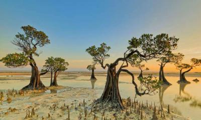 2021.07.26 - Walakiri海滩的红树林,印度尼西亚松巴岛