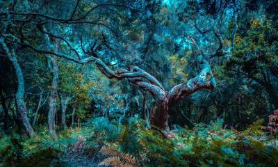 马德拉岛的法纳尔森林,葡萄牙