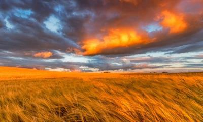 东洛锡安的金黄麦田,苏格兰