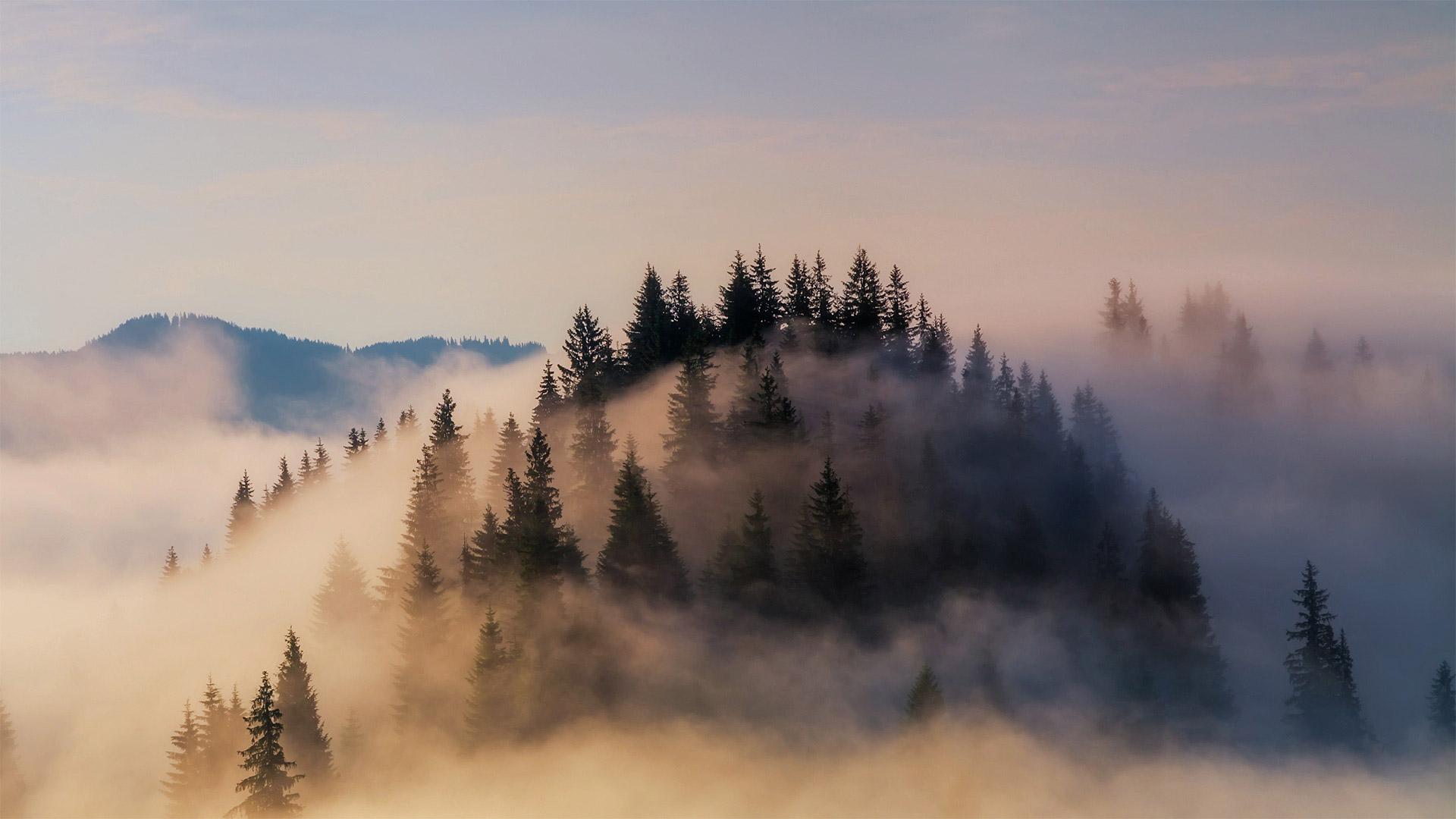 © Anton Petrus/Getty Images