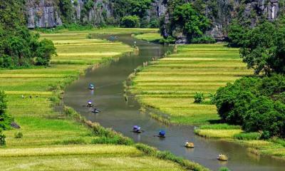 2021.07.15 - Ngo Dong河两岸的稻田美景,越南宁平省