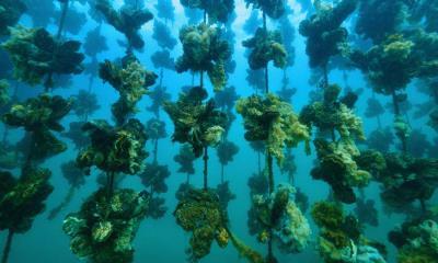 Notojima岛附近的牡蛎养殖场,日本石川县