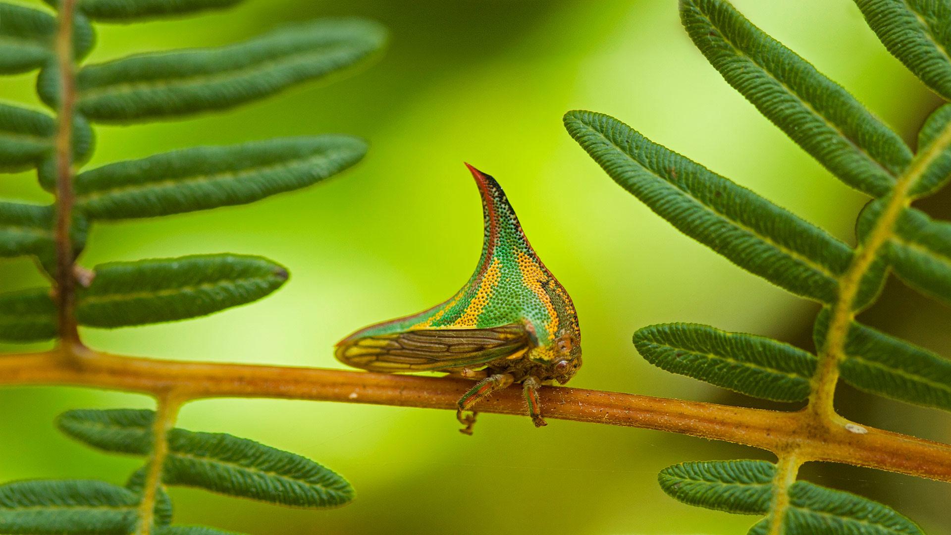 Pico Bonito国家公园里的刺蛾,洪都拉斯 (© Mac Stone/Tandem Stills + Motion)