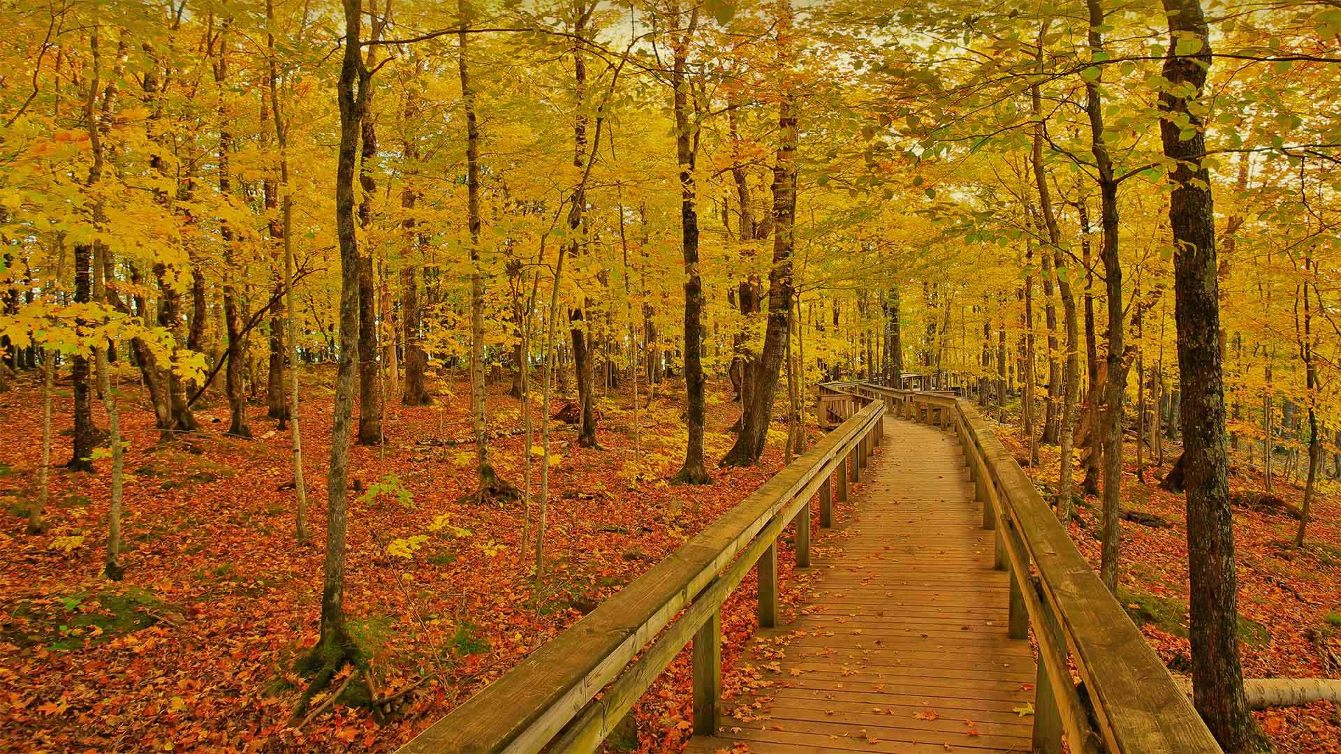 Escarpment Trail in Porcupine Mountains Wilderness State Park, Michigan (© Pat & Chuck Blackley/Alamy)