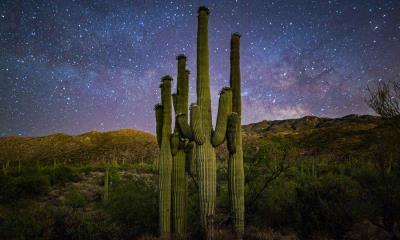 星空下的仙人掌家族,美国萨瓜罗国家公园
