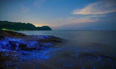 冈山沿岸的发光海洋萤火虫,日本
