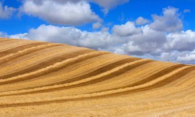 2020.07.26 - 云下的麦田,西班牙巴利亚多利德